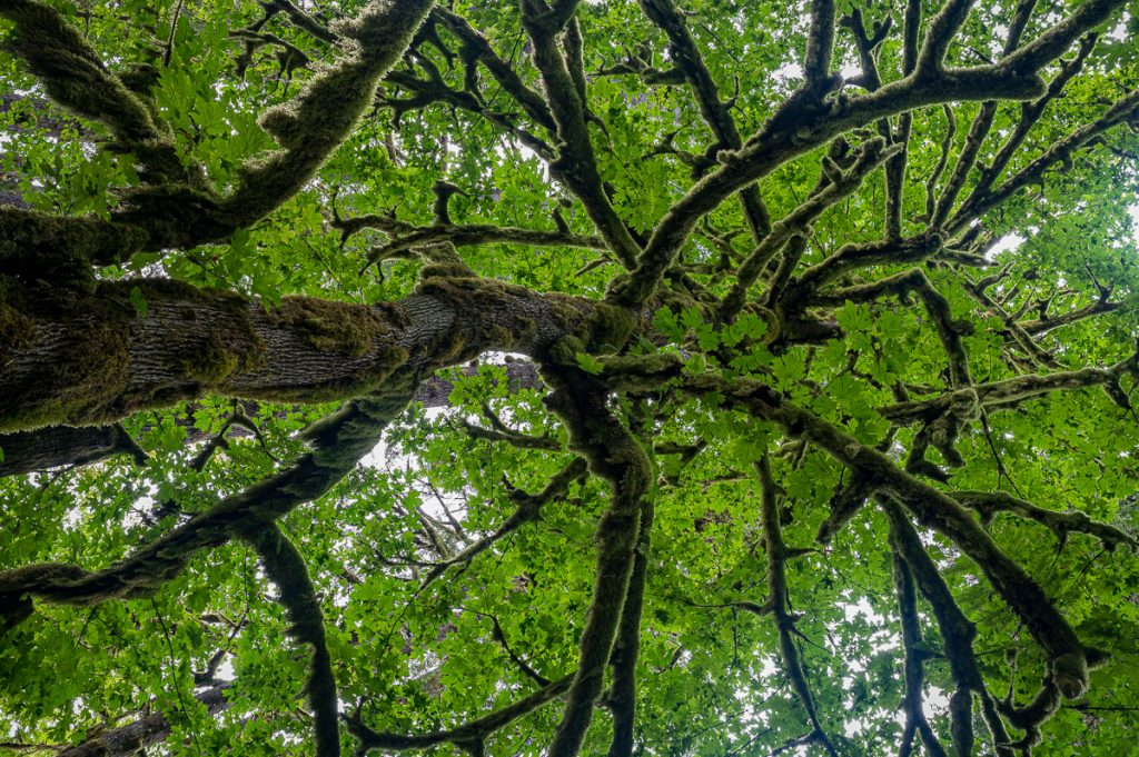 Rockport State Park tree canopy